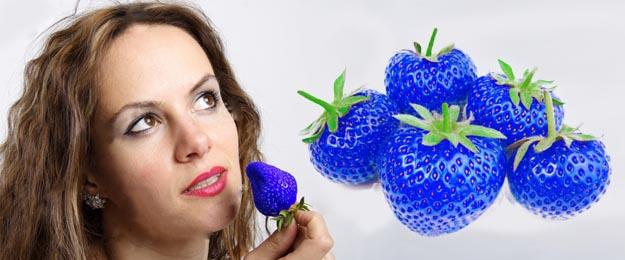Semienka modrej jahody