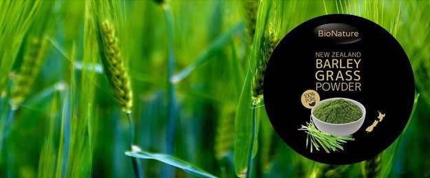 Mladý zelený jačmeň z Nového Zélandu