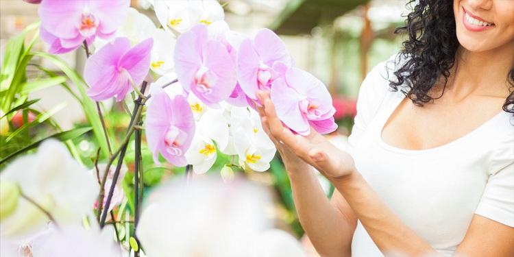 1-dňový zájazd do Viedne na výstavu orchideí a tillandsií